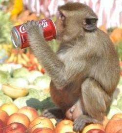 Animal photos - Monkey's drink