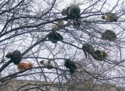 """Funny photos - """" Cat tree"""""""