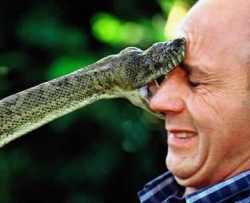 Funny photos - Snake kisses