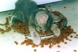 Animal photos - Sleeping on food
