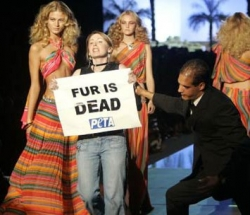 Funny photos - Stupid Peta protest