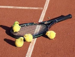 Funny photos - Tennis balls or chickens