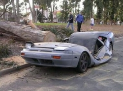 Funny photos - Tree crushes car