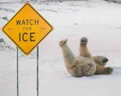 Animal photos - Watch for ice