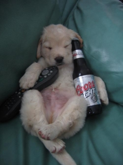 Animal photos - Coors Light