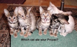 Animal photos - Drug cat