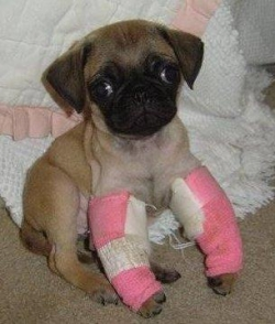 Animal photos - Broken legs