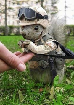 Animal photos - Squirrel's medal