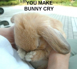 Animal photos - Bunny cry