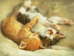 Animal photos - Drunken cats