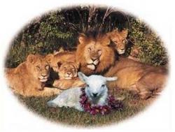 Animal photos - New family