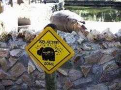 Animal photos - Splatter zone