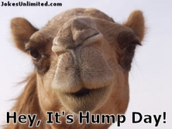 Animal photos - It's hump day !