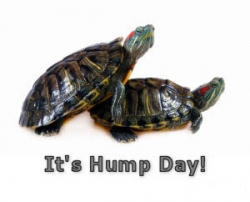 Animal photos - Turtle's hump day
