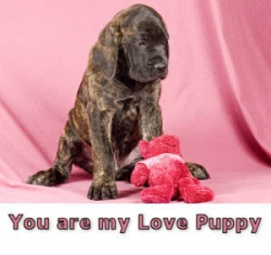 Animal photos - You are my love puppy