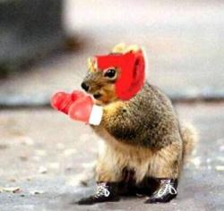Animal photos - Real boxer