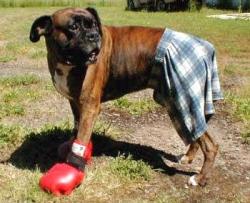 Animal photos - Boxing loser