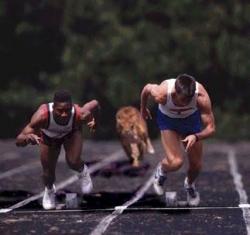 Funny photos - The tiger in a sprint