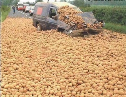 Funny photos - Potatoes storm