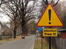 Funny photos - Attention tree