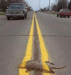 Funny photos - An unlucky victim