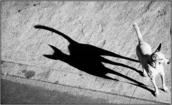 Animal photos - Evil shadow