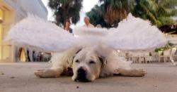 Animal photos - Broken wings