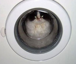 Animal photos - Washing cat