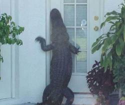 Animal photos - Anybody home ???