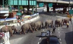 Animal photos - The march