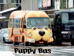 Funny photos - Puppy bus