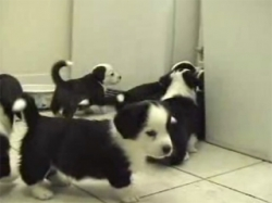 Funny photos - Doggies vs cat