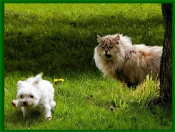 Animal photos - Puppy scare