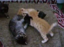 Funny photos - A pile of kittens