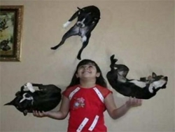 Funny photos - Toss up the dogs