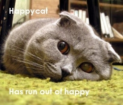 Animal photos - Happy cat