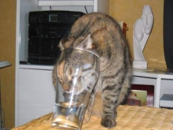 Animal photos - Stupid glass