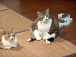 Animal photos - Fatty cat