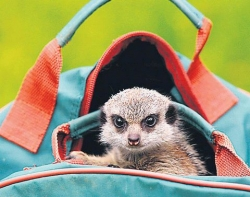 Animal photos - In stupid bag