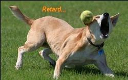 Animal photos - Retard...