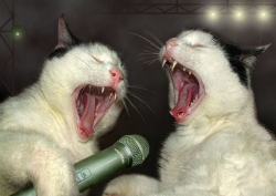 Animal photos - Zealous singers
