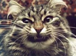 Animal photos - I'll kill them