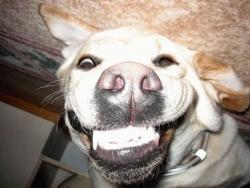 Animal photos - Mad dog