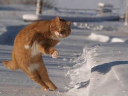 Animal photos - Snow dance