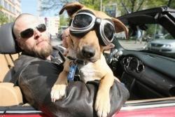 Funny photos - Like boss like dog