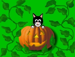 Halloween pictures - Cat and Pumpkin