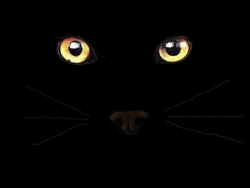 Halloween pictures - Cat Eyes