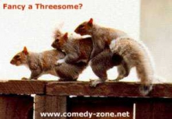 Animal photos - FANCY A THREESOME?