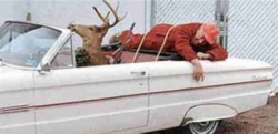 Animal photos - DEER REVENGE