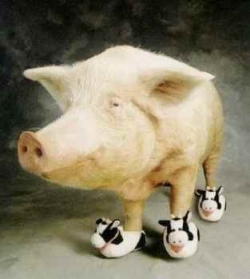 Animal photos - COW SLIPPERS
